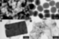 csm_Zeolites_9704ef637f.png