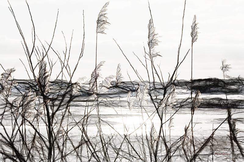 Winterriet