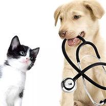 hund og katt.jpg