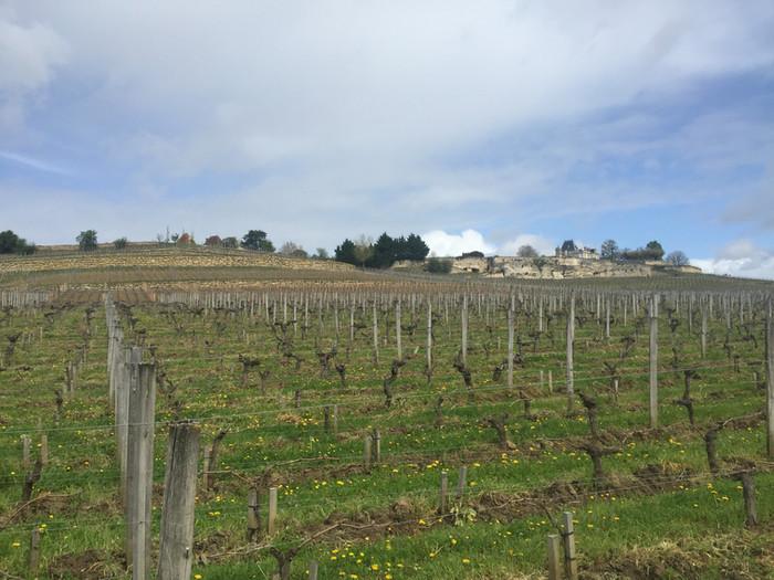 Wine Weekend in Bordeaux
