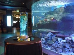Underwater Centerpieces
