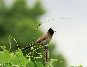 bird-234664__480.jpg