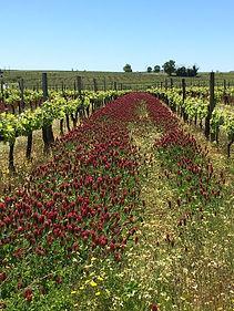 vignes printemps.jpg