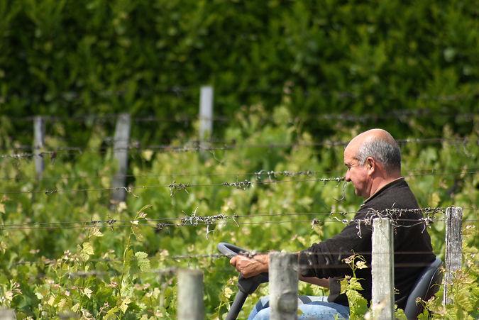 Tracteur, entretien vigne, désherbage, château Pertignas