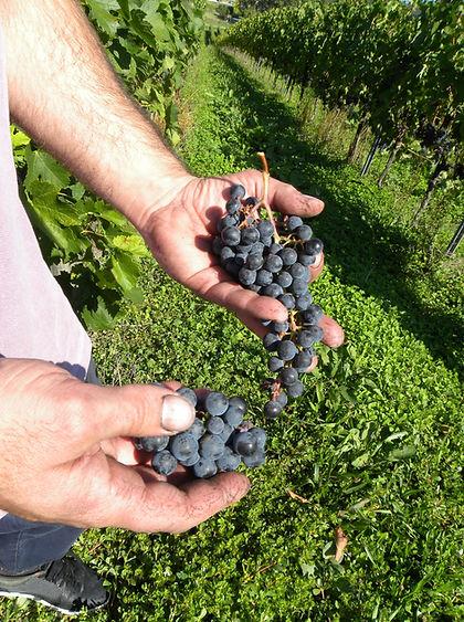 Merlot, 2015, cepage, vin, pertignas