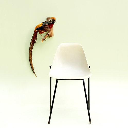 Chaise fibre de verre années 50/60