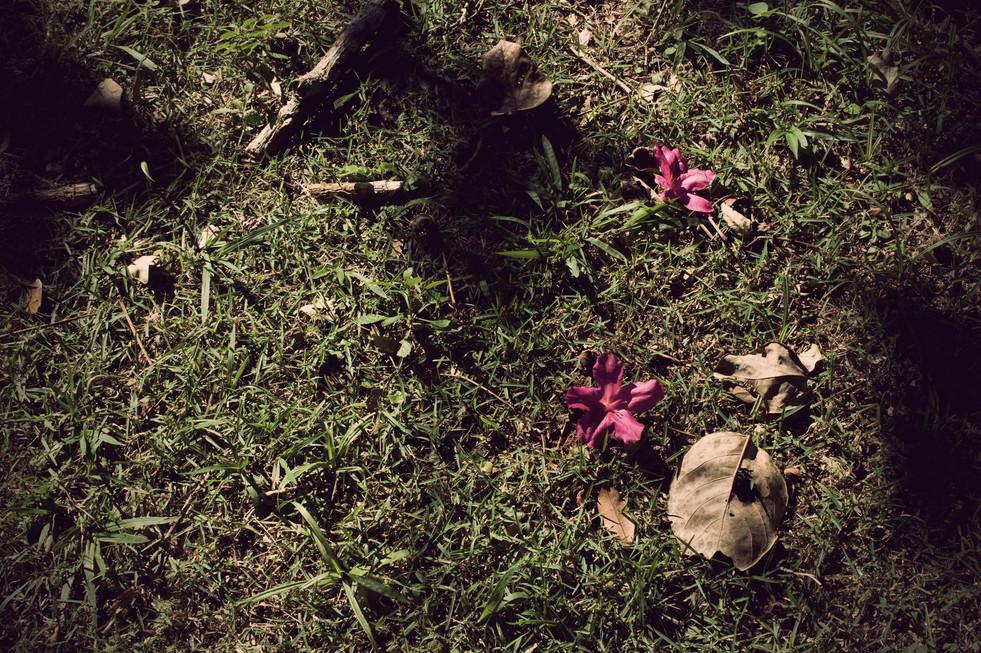 Me encantava com as flores que encontrava pelo chão