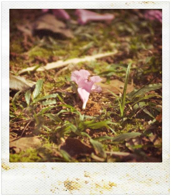 Autorretrato enquanto flor