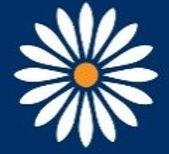 policy daisy.jpg