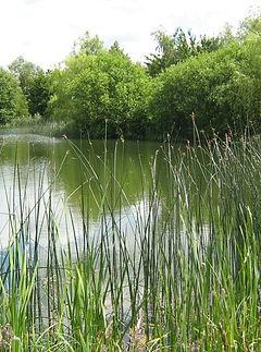 nature reserve 2.jpg