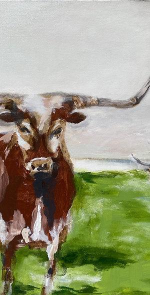 WILD TEXAS Grand Ranch Collection