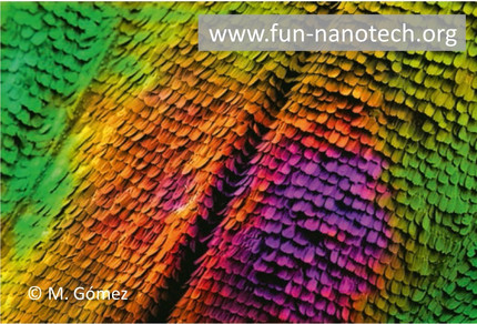 Manuel's SEM image of a butterfly wing selected for the FOTCIENCIA 14 catalogue