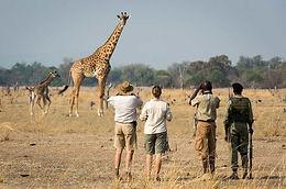 walking-safari-zambia-590x390.jpg