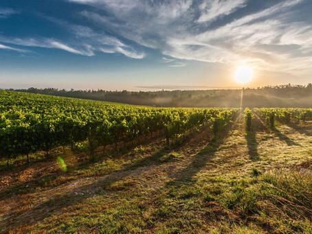 Uruguai para amantes de vinhos.