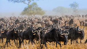viajes-a-tanzania-parque-nacional-sereng