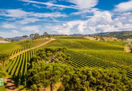 As 5 melhores vinícolas para visitar em Santa Catarina