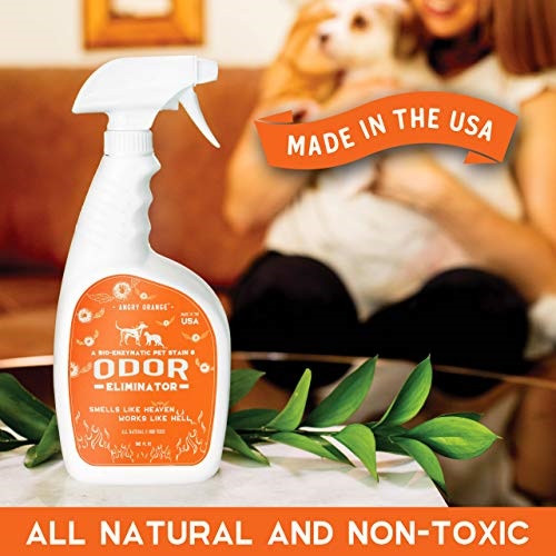Pet Odor Eliminator and Stain Remover to Destroy Cat and Dog Urine 32oz Spray Bottle Pet Odor Eliminator and Stain Remover to Destroy Cat and Dog Urine 32oz Spray Bottle | Kongdeals은 핫딜, hot deals, 할인쿠폰,아마존 할인코드, 아마존 쿠폰 코드, Amazon, coupons, promo codes, coupon codes, freesbees, sale, clearance 등 미국 쇼핑 채널 세일 및 브랜드 정보를 매일 공유