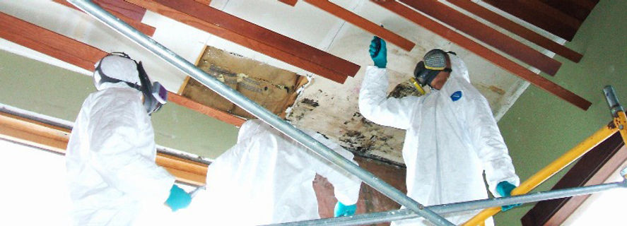 Mold Removal & Remediation Experts