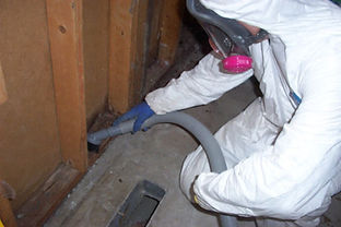 Mold Remediation Specialists