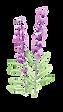 紫はな.png