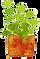 観葉植物1.png
