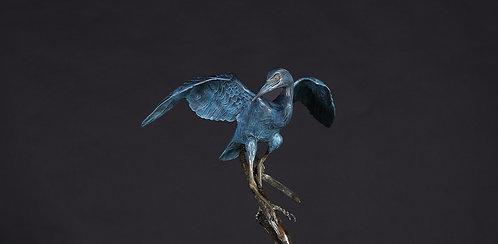 Balancing Little Blue Heron