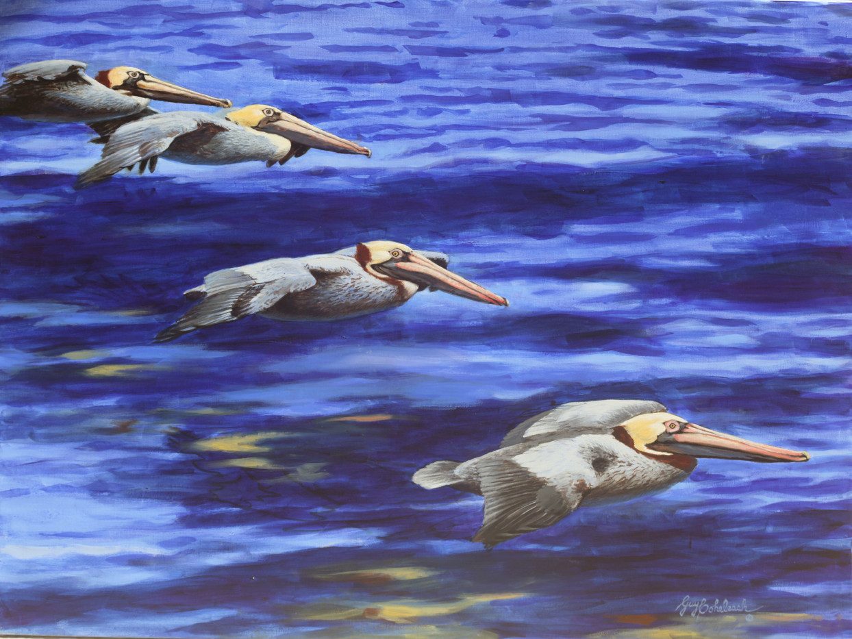 Effortless Pelicans by Guy Coheleach