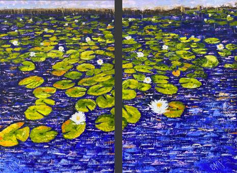 Florida Water Lilies