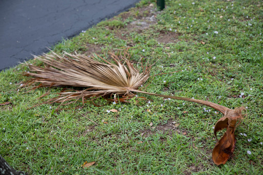 Palm Frond in Grass
