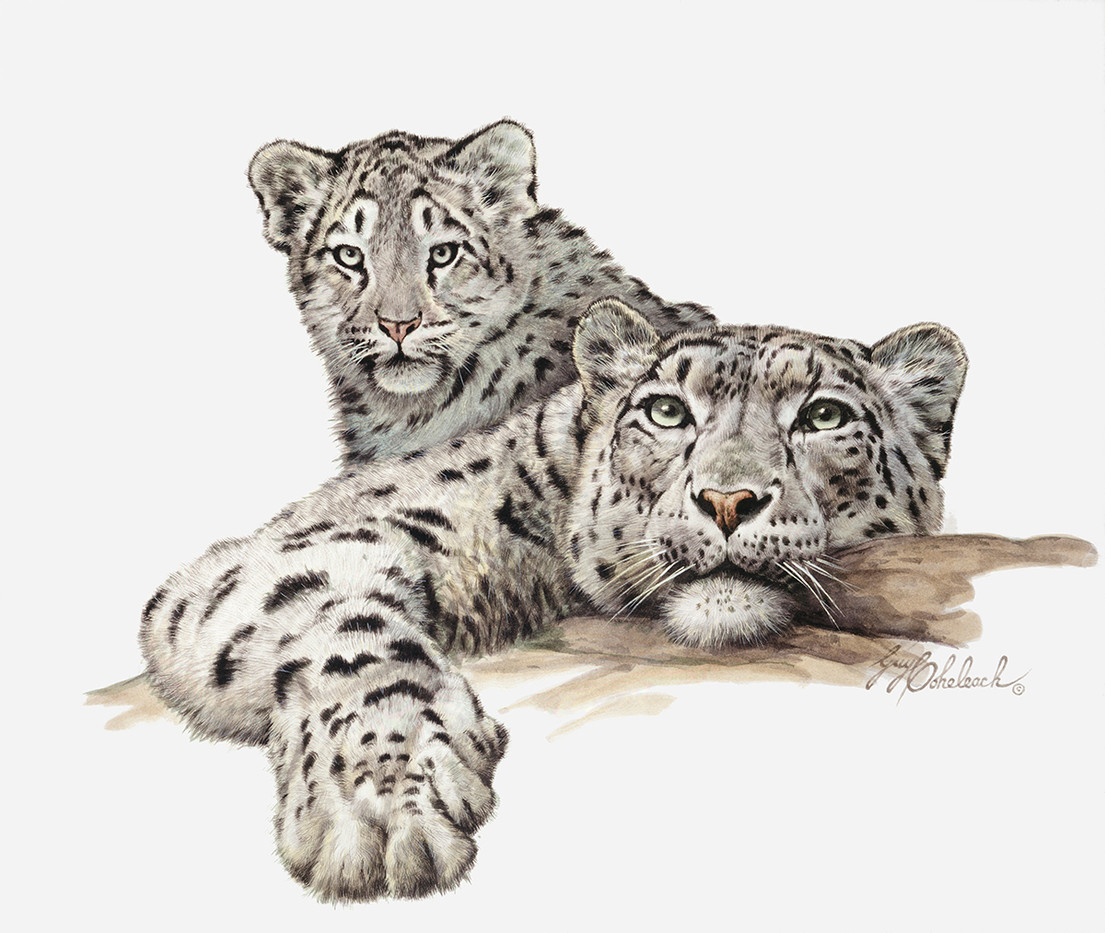 Snow Leopard with Cub by Guy Coheleach