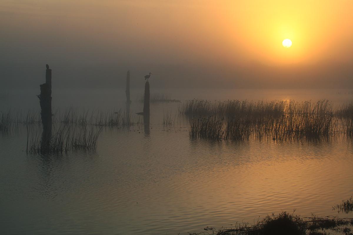 Spoonbill Sunrise