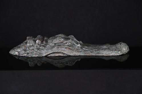Bull Alligator Head, Large