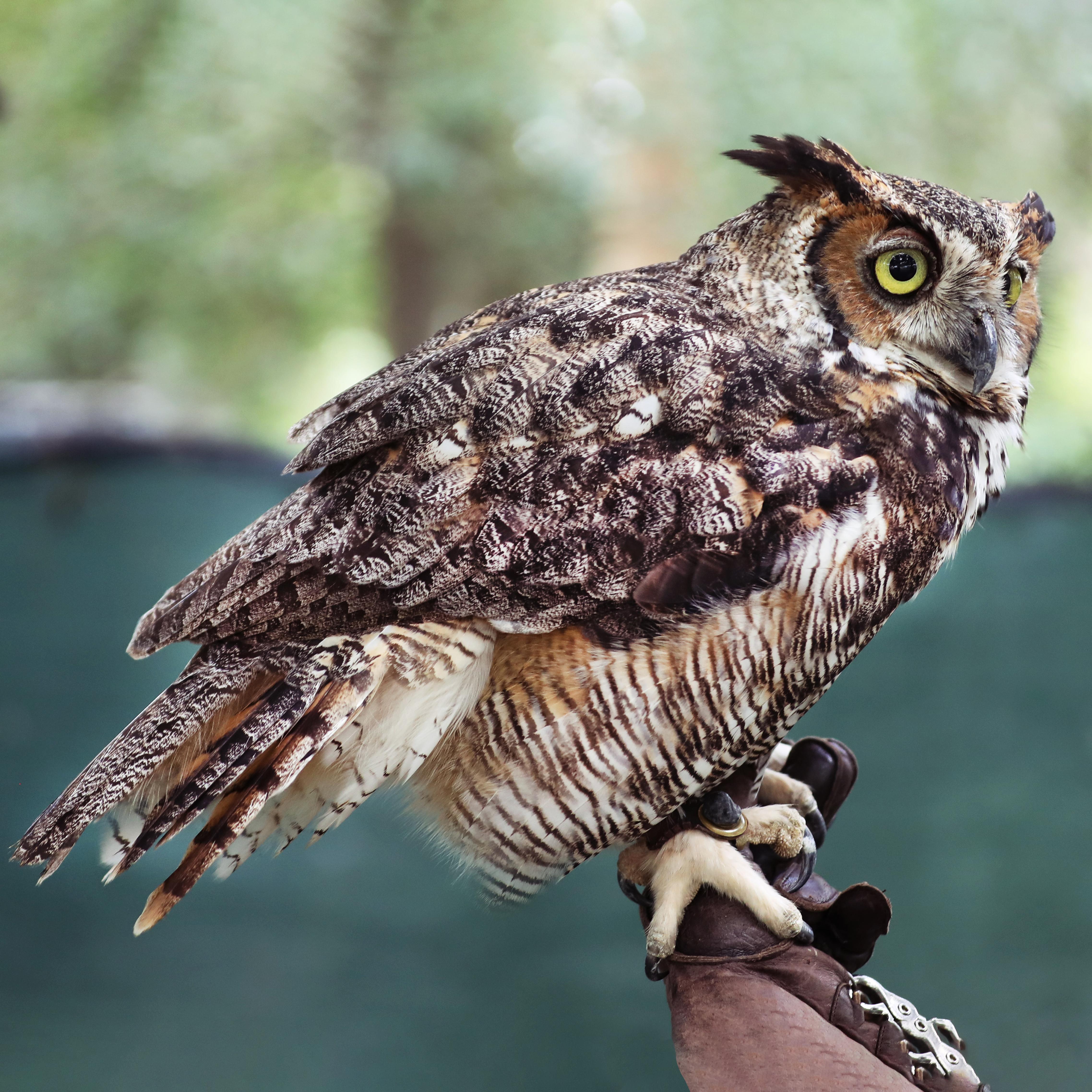 Owl Artwork Collection