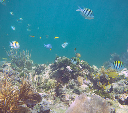 Coral Structure and Fish 3 Edit.jpg