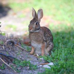 Rabbit Artwork Collection