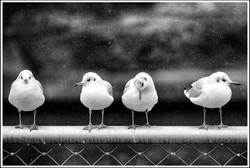 Daniel Hambourger - Photographe :Tombe la neige