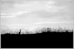 Daniel Hambourger - Photographe : De profil