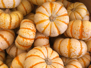 The Best Pumpkin Patch in Southern California
