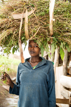 Cattle co-operative, Rwanda.