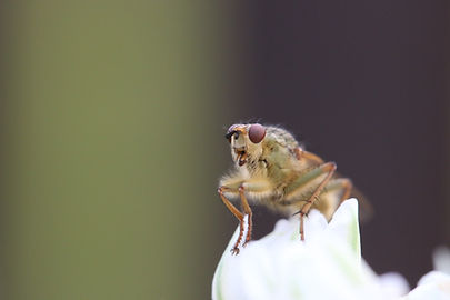 Close-up of a Bug