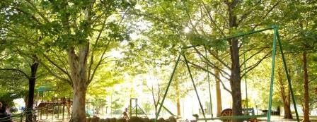 Large shady playground.