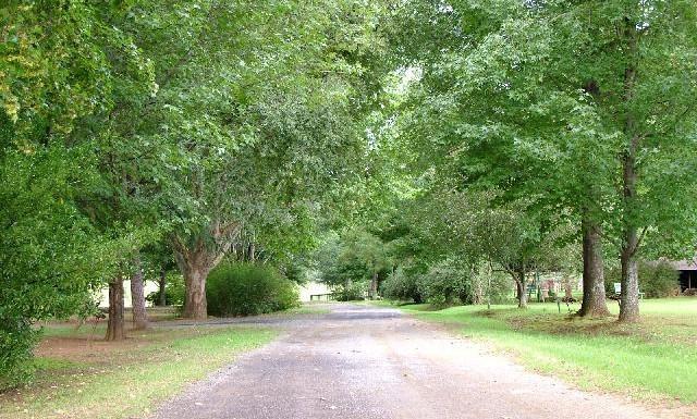 Trees in park.JPG