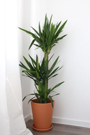 Planta para quarto