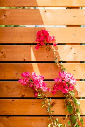 plantas e flores decorativas
