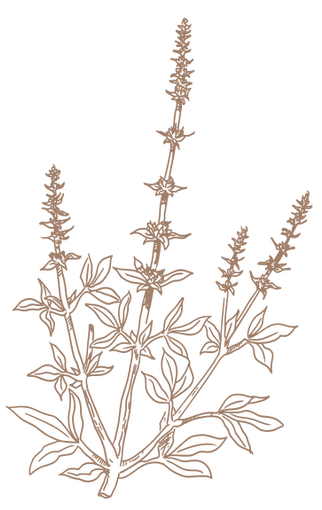 Herbs-04.png