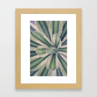 agave plant detail photograph