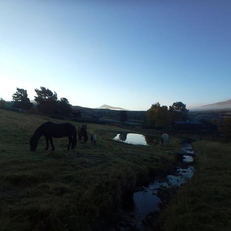 Hestene beiter rett ved fjellskolen