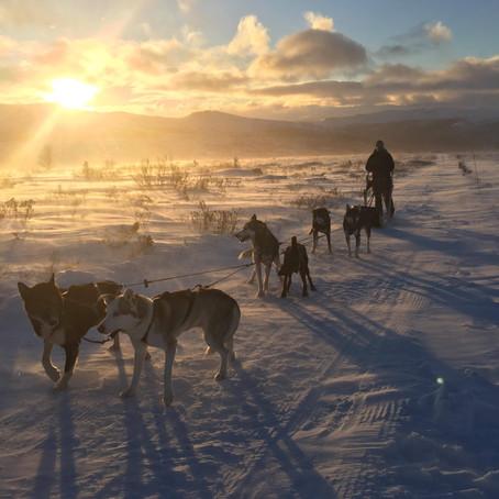 Vinteridyll på Høvringen
