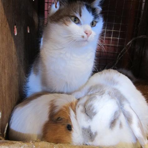 Katten Mjau koser seg sammen med smådyrene