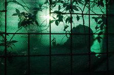 BegoAmare_The Living Forest (3).jpg